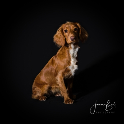 pet photography in london